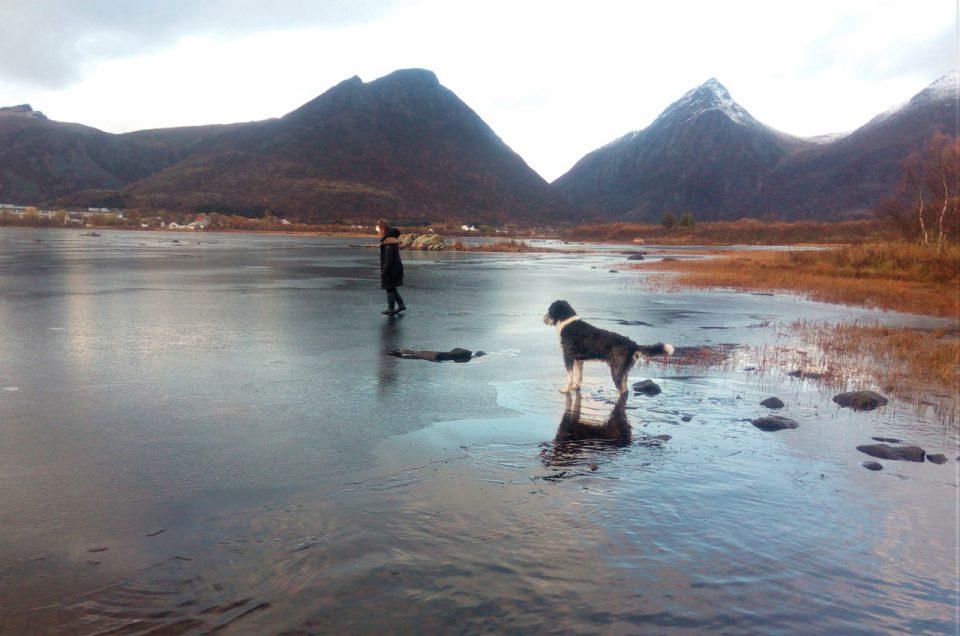 koira ja ihminen ohuella järven jäällä